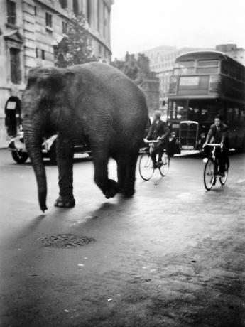 Elephant on the Strand
