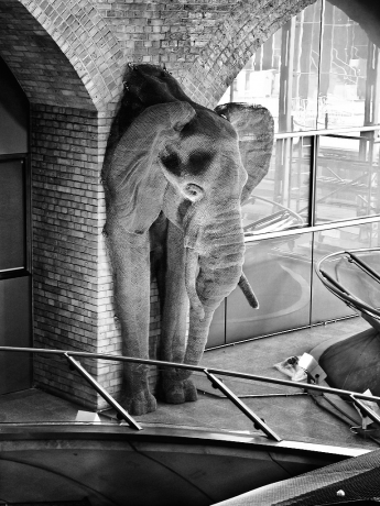 Elephant at Waterloo