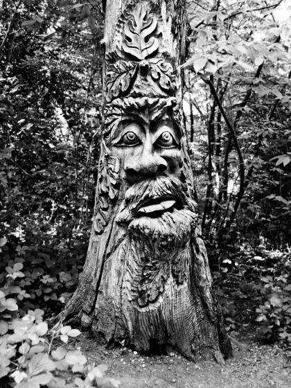 Tree, Franks Park, Belvedere - click to enlarge