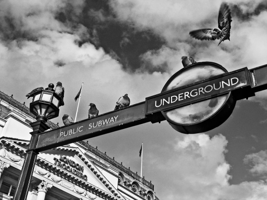 Pigeons, Piccadilly Circus - click to enlarge