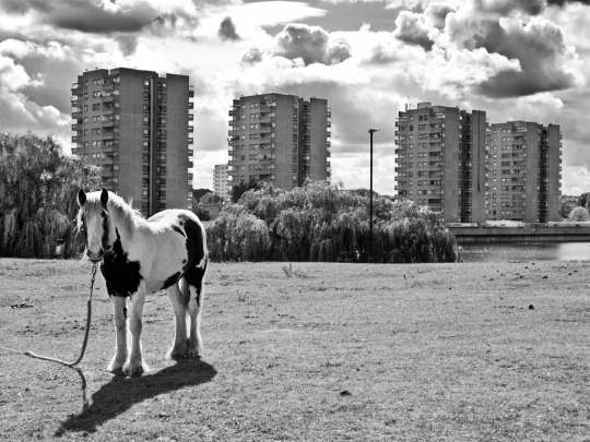 Horse, Thamesmead - click to enlarge
