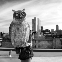 Owl, rooftop, Hoxton Street