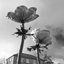 Flowers, Lefevre Walk, Bow