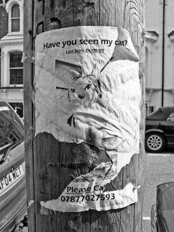 Lost cat, Clapton