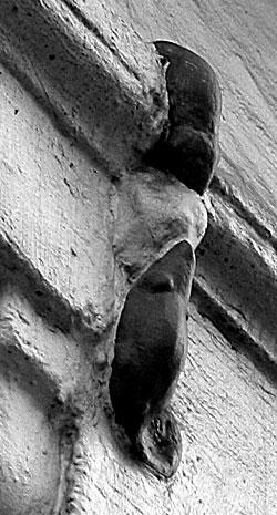 Mice, Philpot Street